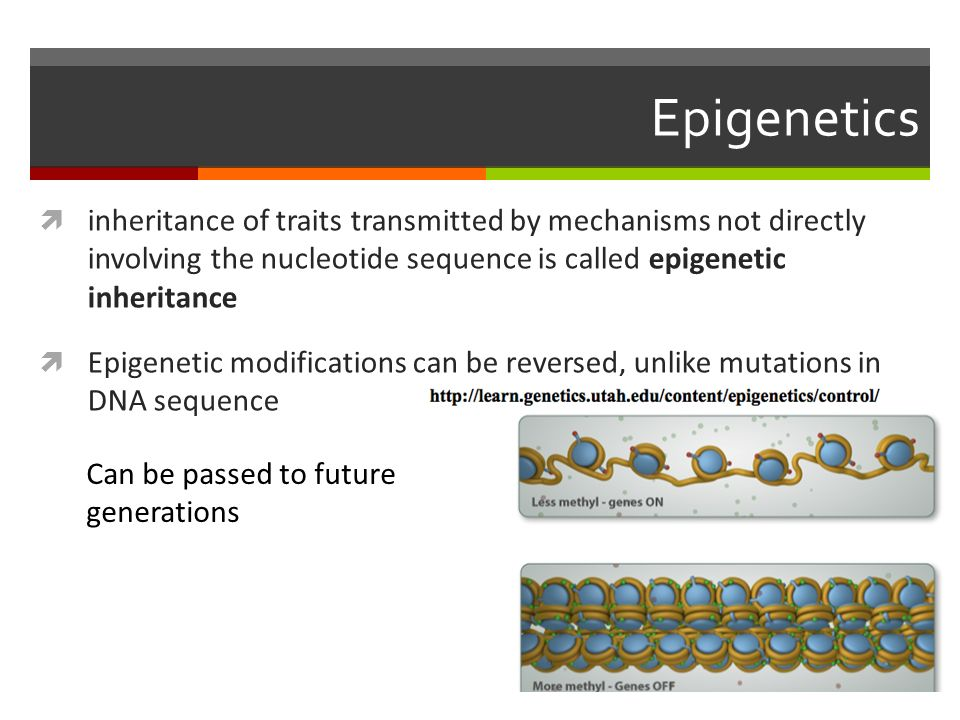 Epigenetics  inheritance of traits transmitted by mechanisms not directly involving the nucleotide sequence is called epigenetic inheritance  Epigenetic modifications can be reversed, unlike mutations in DNA sequence Can be passed to future generations