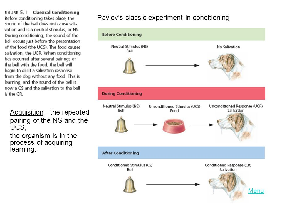 Pavlov's classic experiment in conditioning Acquisition - the repeated pairing of the NS and the UCS; the organism is in the process of acquiring learning.
