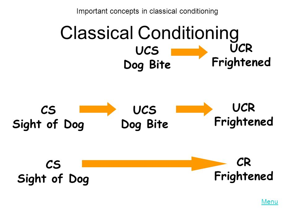Classical Conditioning UCS Dog Bite UCR Frightened CS Sight of Dog UCS Dog Bite UCR Frightened CS Sight of Dog CR Frightened Important concepts in classical conditioning Menu