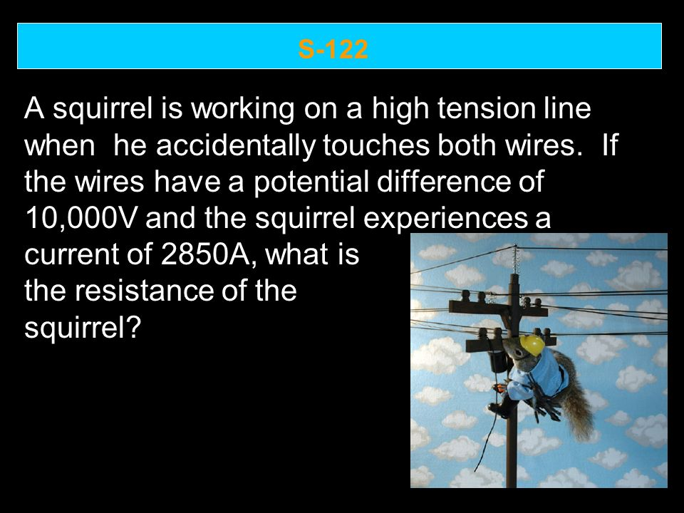 S-122 A squirrel is working on a high tension line when he accidentally touches both wires.