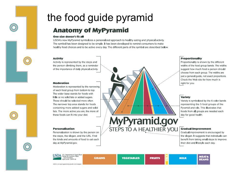Lujo Anatomy Of Mypyramid Colección - Imágenes de Anatomía Humana ...