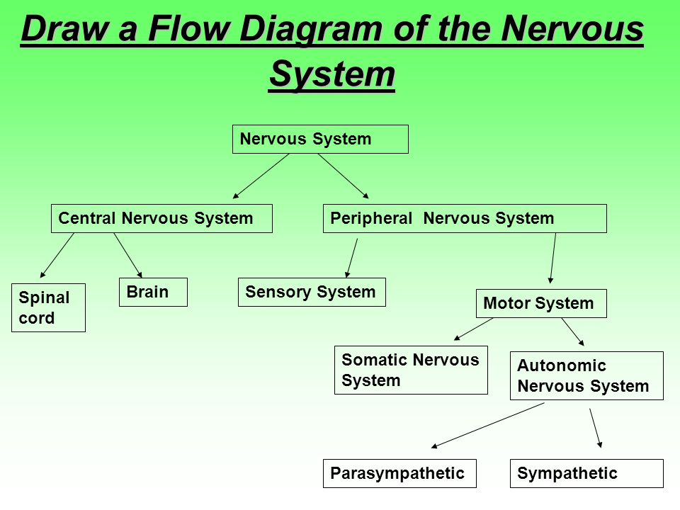 Nervous System Three Basic Functions Performed By Nervous Systems
