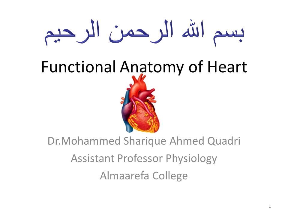 Functional Anatomy Of Heart Drhammed Sharique Ahmed Quadri