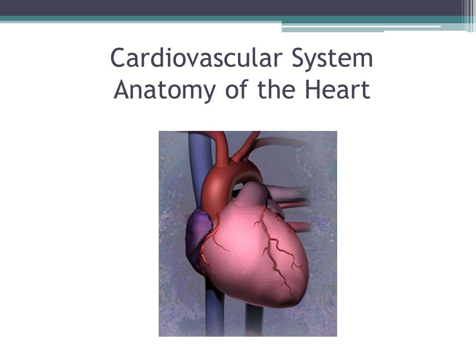Cardiovascular System Anatomy of the Heart. The Cardiovascular ...
