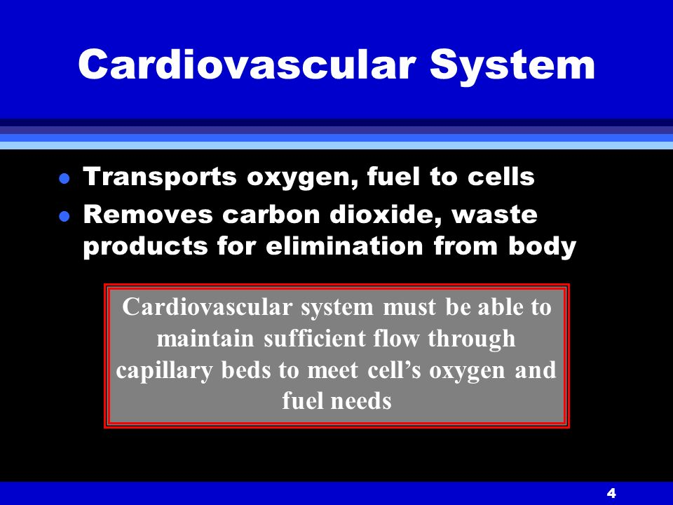 4 Cardiovascular System l Transports oxygen, fuel to cells l Removes carbon dioxide, waste products for elimination from body Cardiovascular system must be able to maintain sufficient flow through capillary beds to meet cell's oxygen and fuel needs