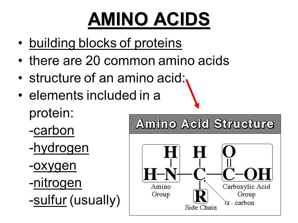 Polymers long chains of amino acids arranged in specific sequence 2 amino acids building blocks of proteins there are 20 common amino acids structure of an amino acid elements included in a protein carbon hydrogen thecheapjerseys Gallery