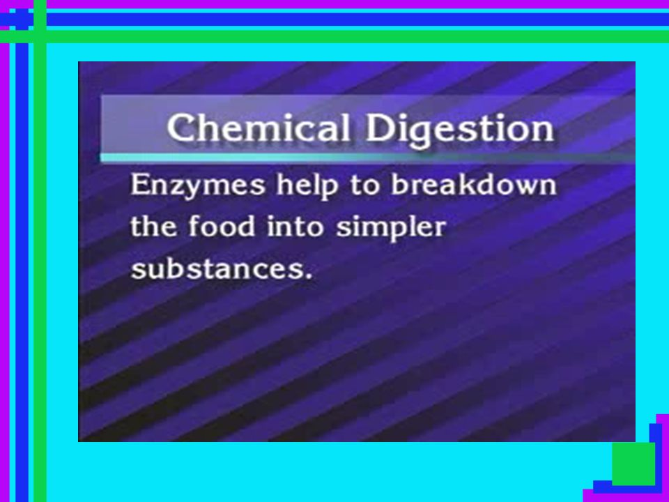 Mouth True digestive organ physical & chemical digestion Salivary Amylase breaks carbohydrates into disaccharides/maltose contains teeth, tongue, soft & hard palate to help with physical digestion food is ingested