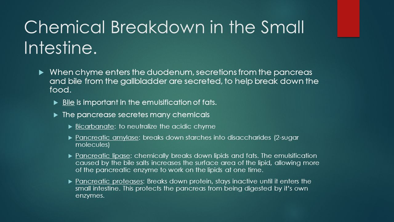 Chemical Breakdown in the Small Intestine.