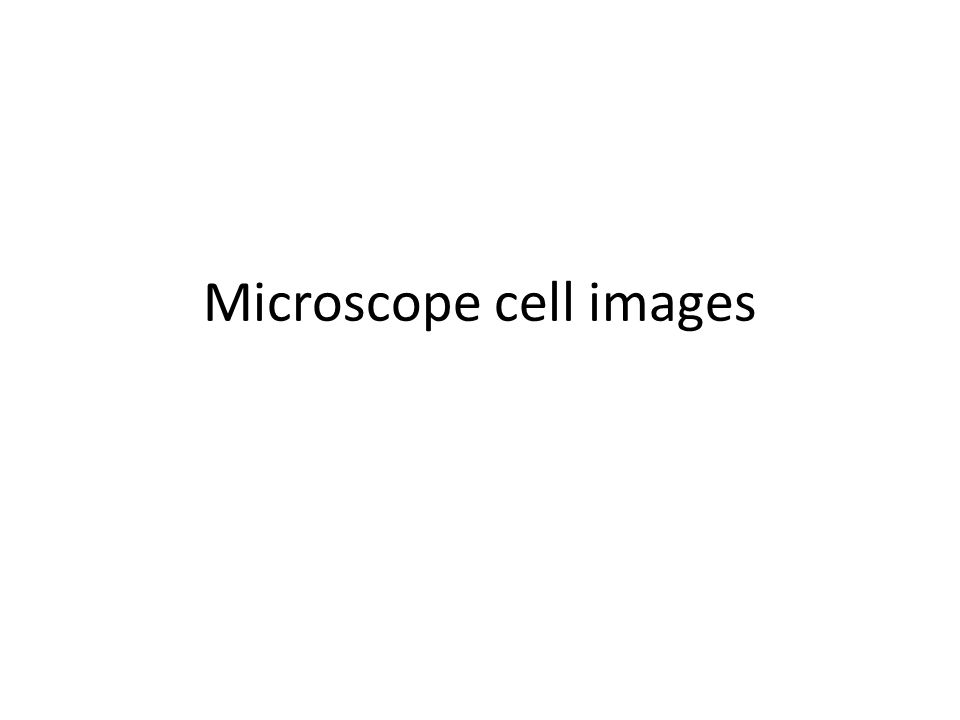 Microscope cell images