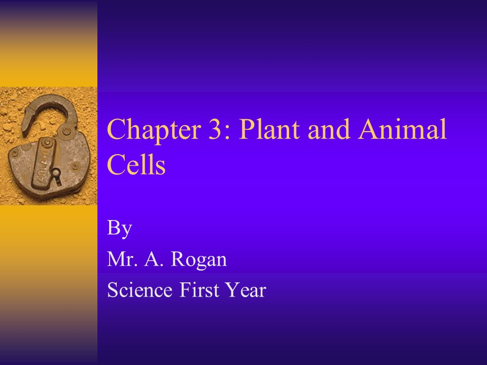 Chapter 3: Plant and Animal Cells By Mr. A. Rogan Science First Year