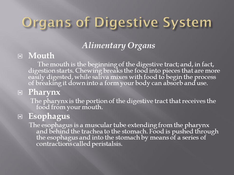 www phschool nutrition and digestion