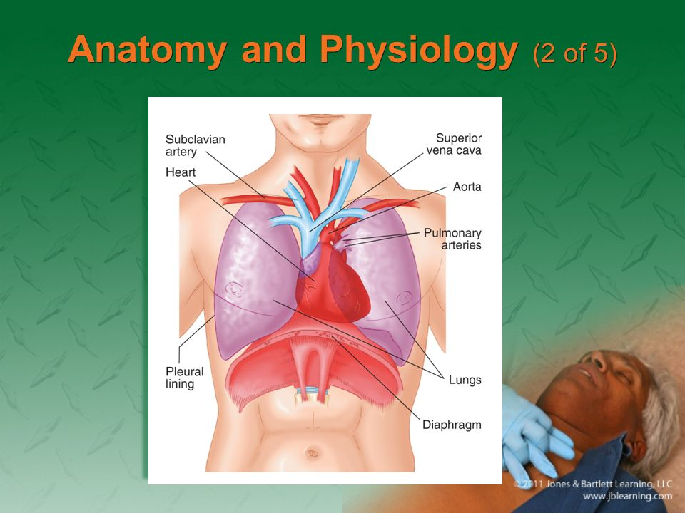 Chapter 27 Chest Injuries. Anatomy and Physiology (1 of 5 ...