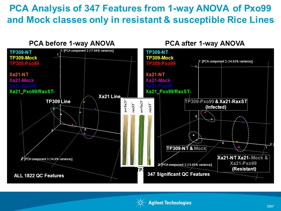 2007 PCA Analysis of 347 Features from 1-way ANOVA of Pxo99 and Mock classes only in resistant & susceptible Rice Lines TP309-NT TP309-Mock TP309-Pxo99 Xa21-NT Xa21-Mock Xa21-Pxo99 Xa21_Pxo99/RaxST- Xa21 Line TP309 Line PCA before 1-way ANOVA TP309-NT & Mock TP309-NT TP309-Mock TP309-Pxo99 Xa21-NT Xa21-Mock Xa21-Pxo99 Xa21_Pxo99/RaxST- Xa21-NT Xa21- Mock & Xa21-Pxo99 (Resistant) TP309-Pxo99 & Xa21-RaxST (Infected) PCA after 1-way ANOVA ALL 1822 QC Features 347 Significant QC Features TP309TP309-Xa21