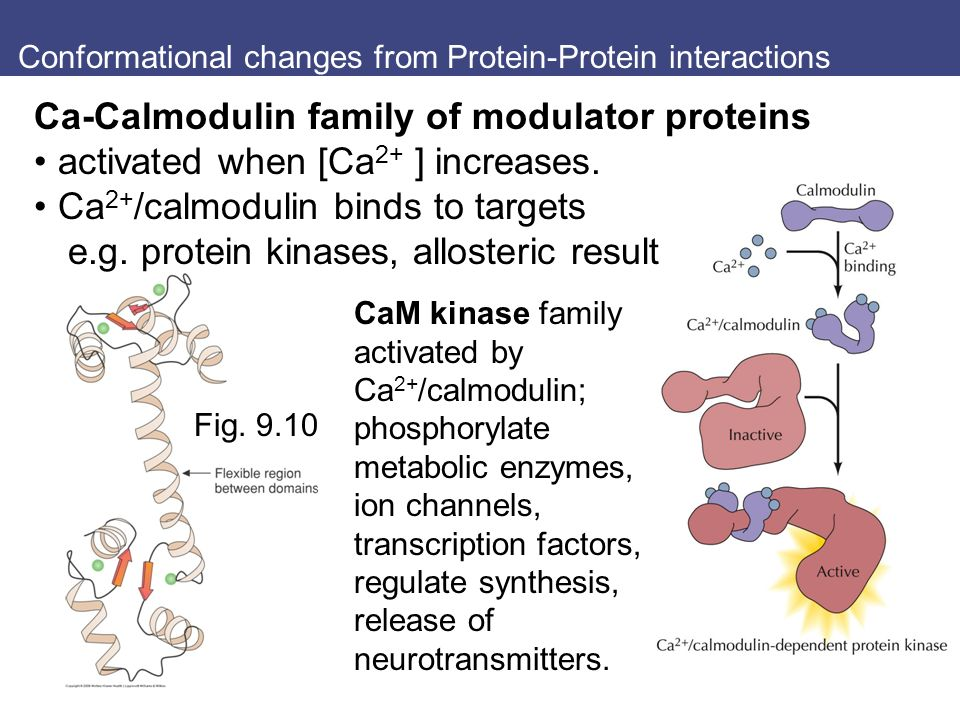 Conformational changes from Protein-Protein interactions Fig.