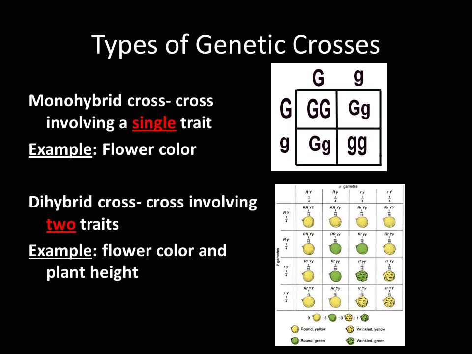 Types of Genetic Crosses Monohybrid cross- cross involving a single trait Example: Flower color Dihybrid cross- cross involving two traits Example: flower color and plant height