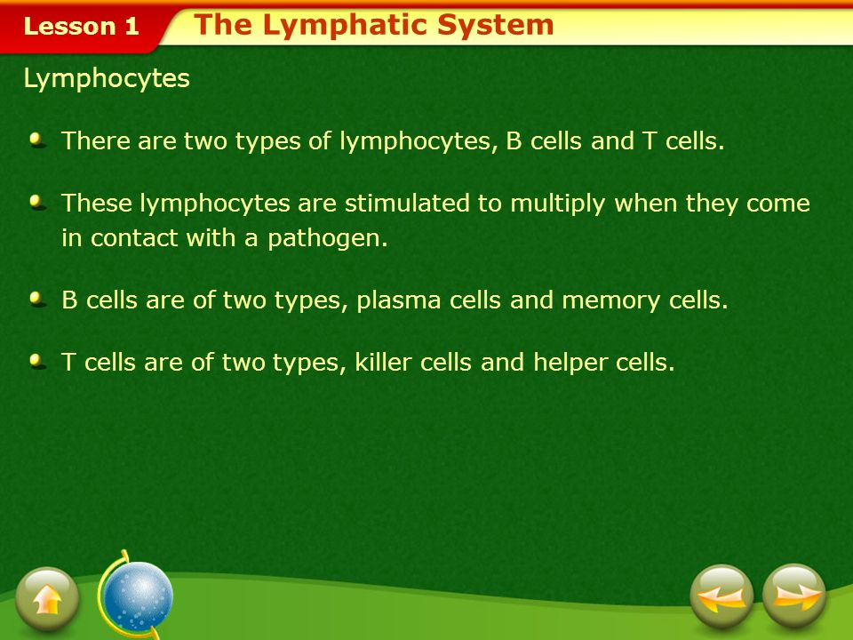 Lesson 1 Lymph Lymph is transported by the lymphatic system to the heart and eventually returns to the blood.