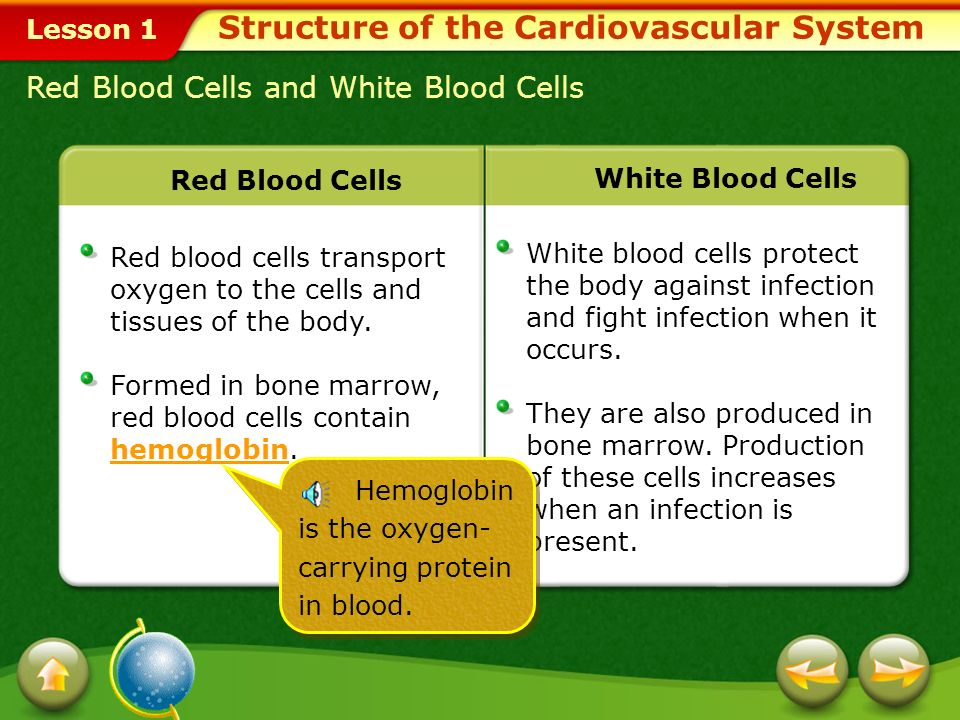 Lesson 1 Blood delivers oxygen, hormones, and nutrients to the cells and carries away wastes that the cells produce.