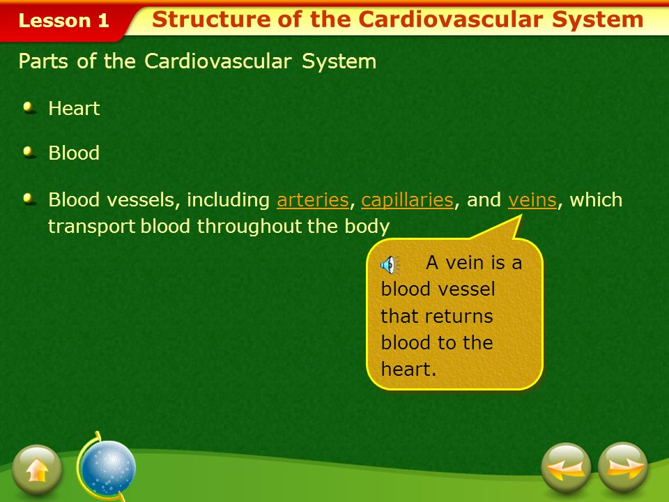 Lesson 1 Heart Blood Blood vessels, including arteries, capillaries, and veins, which transport blood throughout the bodyarteriescapillariesveins Parts of the Cardiovascular System A capillary is a small vessel that carries blood between arterioles and vessels called venules.