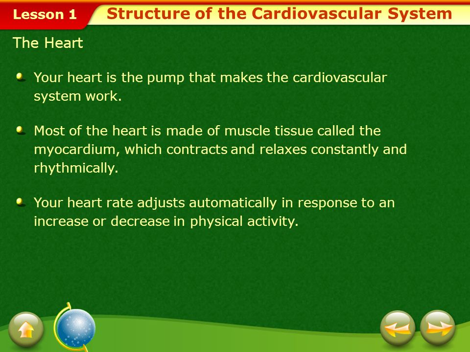 Lesson 1 Heart Blood Blood vessels, including arteries, capillaries, and veins, which transport blood throughout the bodyarteriescapillariesveins Parts of the Cardiovascular System Structure of the Cardiovascular System