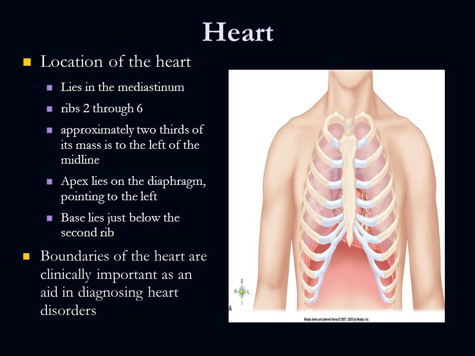 Anatomy Of The Cardiovascular System Chapter 18 Pages Ppt Download