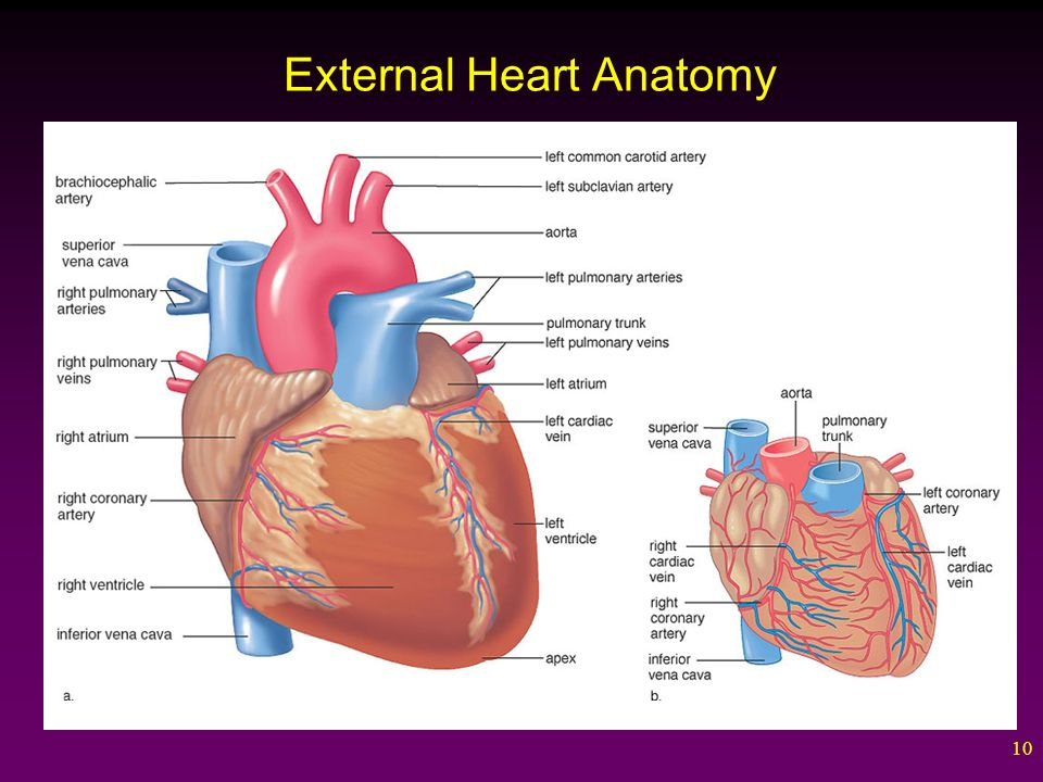 1 Cardiovascular System. 2 Outline The Blood Vessels The Arteries ...