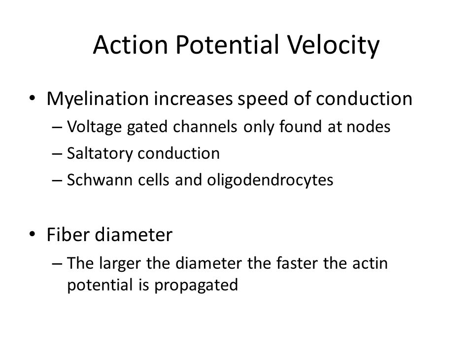Action Potential Velocity Myelination increases speed of conduction – Voltage gated channels only found at nodes – Saltatory conduction – Schwann cells and oligodendrocytes Fiber diameter – The larger the diameter the faster the actin potential is propagated