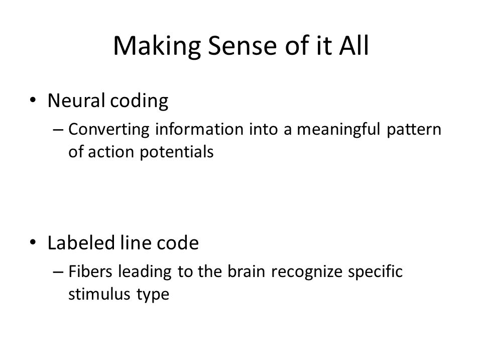 Making Sense of it All Neural coding – Converting information into a meaningful pattern of action potentials Labeled line code – Fibers leading to the brain recognize specific stimulus type