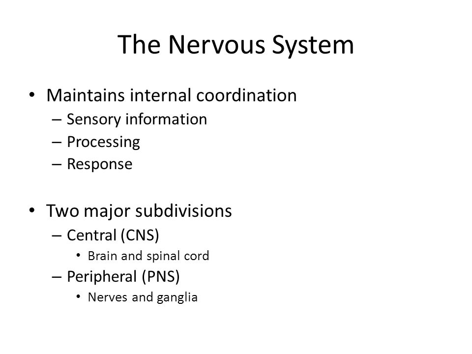 The Nervous System Maintains internal coordination – Sensory information – Processing – Response Two major subdivisions – Central (CNS) Brain and spinal cord – Peripheral (PNS) Nerves and ganglia