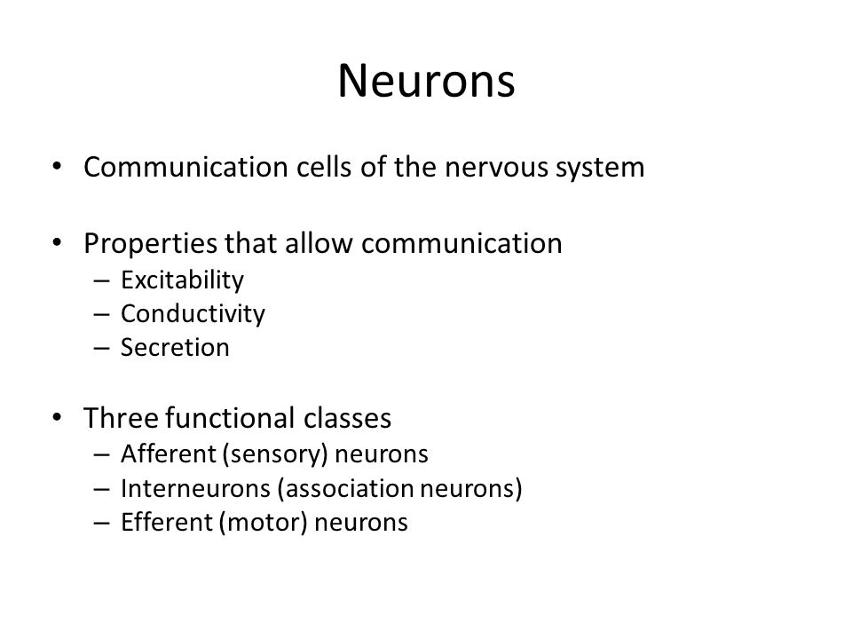 Neurons Communication cells of the nervous system Properties that allow communication – Excitability – Conductivity – Secretion Three functional classes – Afferent (sensory) neurons – Interneurons (association neurons) – Efferent (motor) neurons