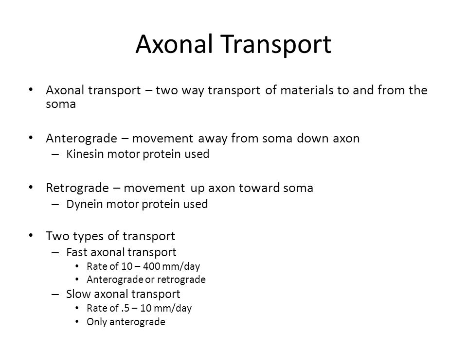 Axonal Transport Axonal transport – two way transport of materials to and from the soma Anterograde – movement away from soma down axon – Kinesin motor protein used Retrograde – movement up axon toward soma – Dynein motor protein used Two types of transport – Fast axonal transport Rate of 10 – 400 mm/day Anterograde or retrograde – Slow axonal transport Rate of.5 – 10 mm/day Only anterograde