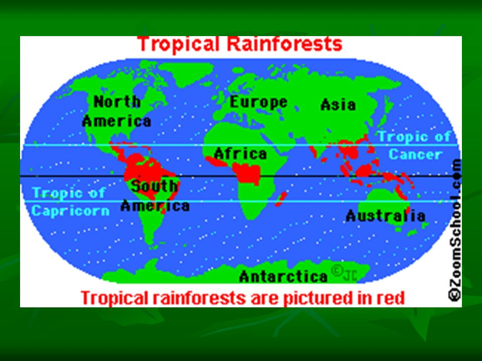 an analysis of the two major types of rain forests A tropical rainforest is an ecosystem which combines an abundance of sunlight, rain, and high temperatures and is located in the tropics this combination creates a very moist, almost steamy atmosphere, which encourages rapid growth within the forest.