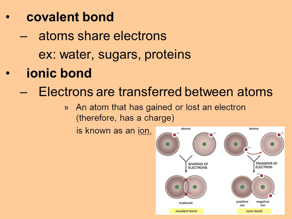 covalent bond –atoms share electrons ex: water, sugars, proteins ionic bond –Electrons are transferred between atoms »An atom that has gained or lost an electron (therefore, has a charge) is known as an ion.