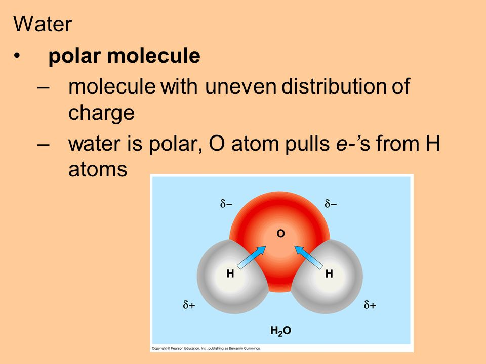 Water polar molecule –molecule with uneven distribution of charge –water is polar, O atom pulls e-'s from H atoms