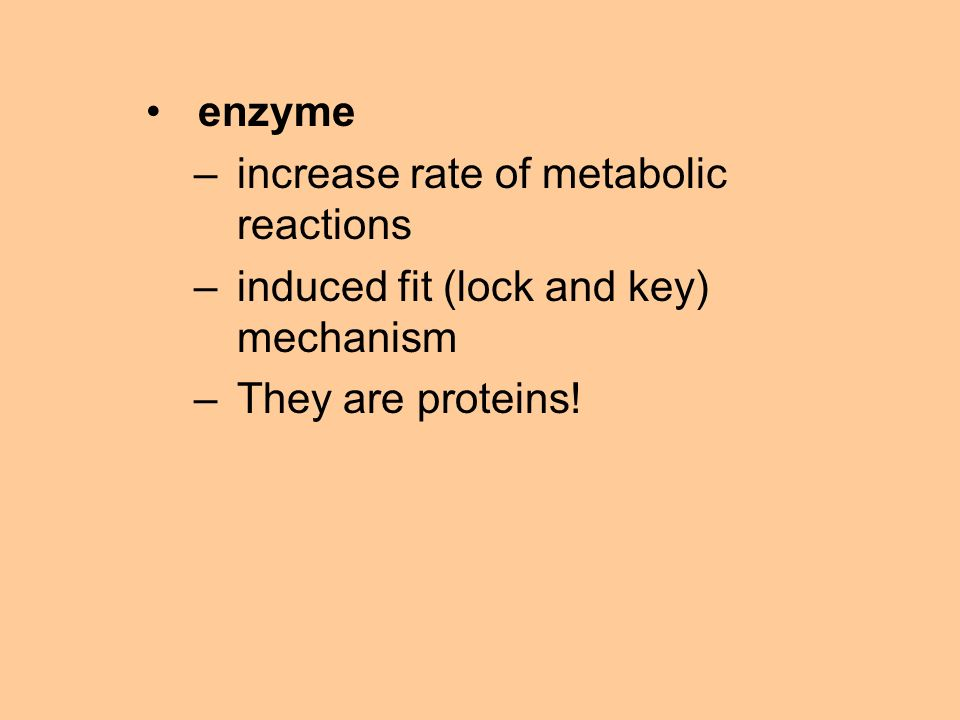 enzyme –increase rate of metabolic reactions –induced fit (lock and key) mechanism –They are proteins!