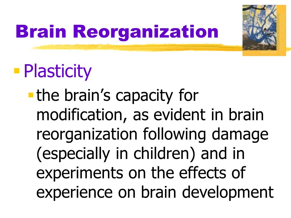 Brain Reorganization  Plasticity  the brain's capacity for modification, as evident in brain reorganization following damage (especially in children) and in experiments on the effects of experience on brain development