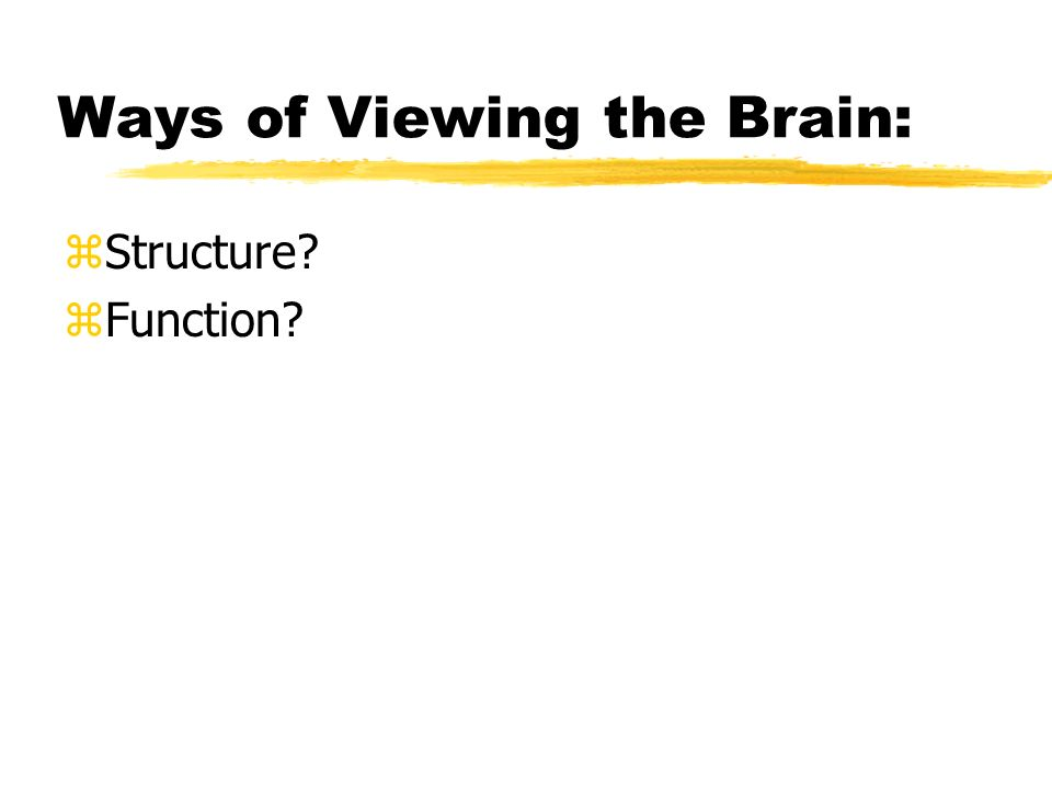Ways of Viewing the Brain: zStructure zFunction