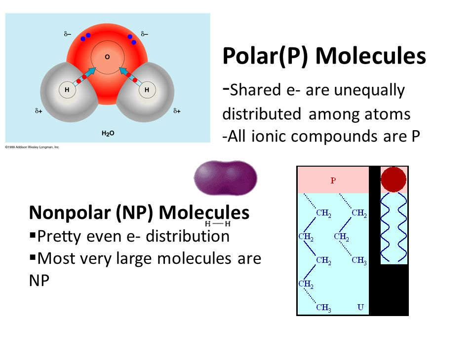 Polar(P) Molecules - Shared e- are unequally distributed among atoms -All ionic compounds are P Nonpolar (NP) Molecules  Pretty even e- distribution  Most very large molecules are NP