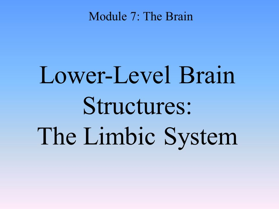 Lower-Level Brain Structures: The Limbic System Module 7: The Brain