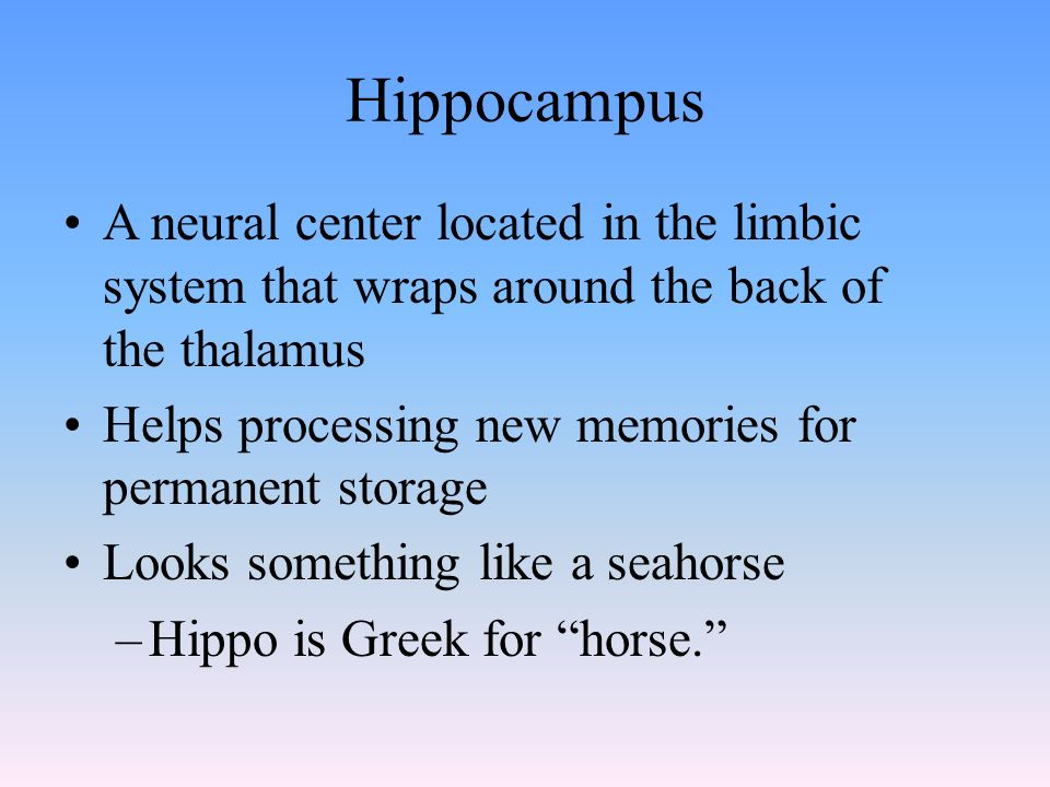 Hippocampus A neural center located in the limbic system that wraps around the back of the thalamus Helps processing new memories for permanent storage Looks something like a seahorse –Hippo is Greek for horse.