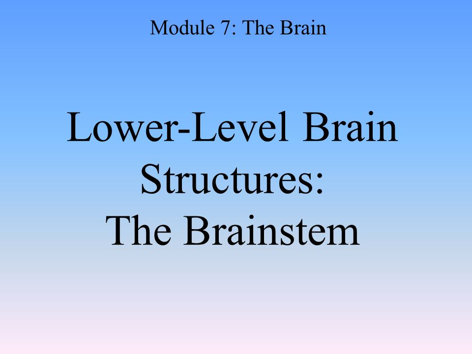 Lower-Level Brain Structures: The Brainstem Module 7: The Brain