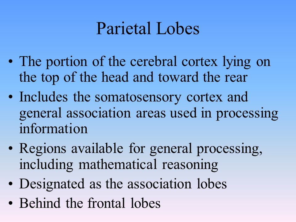 Parietal Lobes The portion of the cerebral cortex lying on the top of the head and toward the rear Includes the somatosensory cortex and general association areas used in processing information Regions available for general processing, including mathematical reasoning Designated as the association lobes Behind the frontal lobes