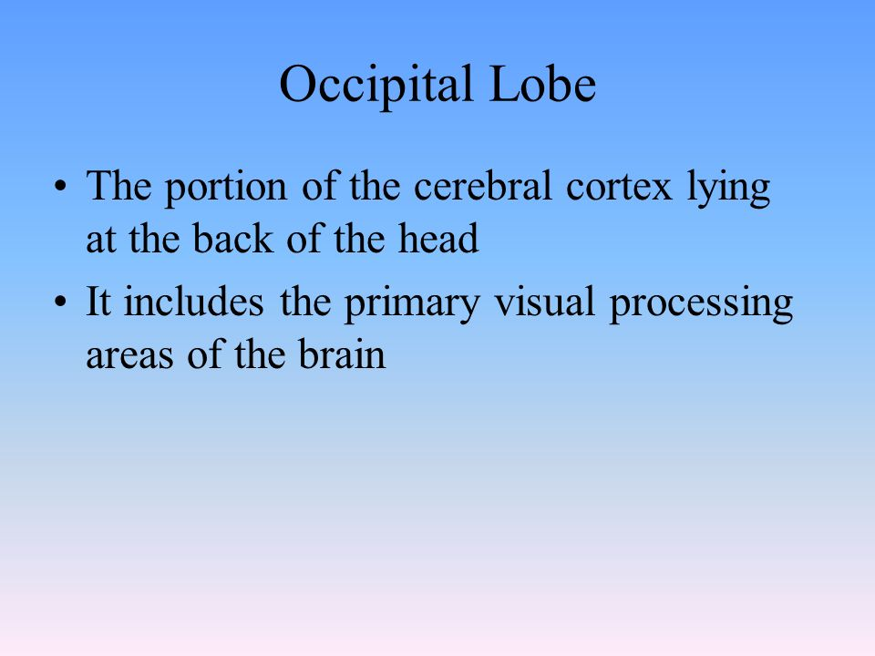 Occipital Lobe The portion of the cerebral cortex lying at the back of the head It includes the primary visual processing areas of the brain