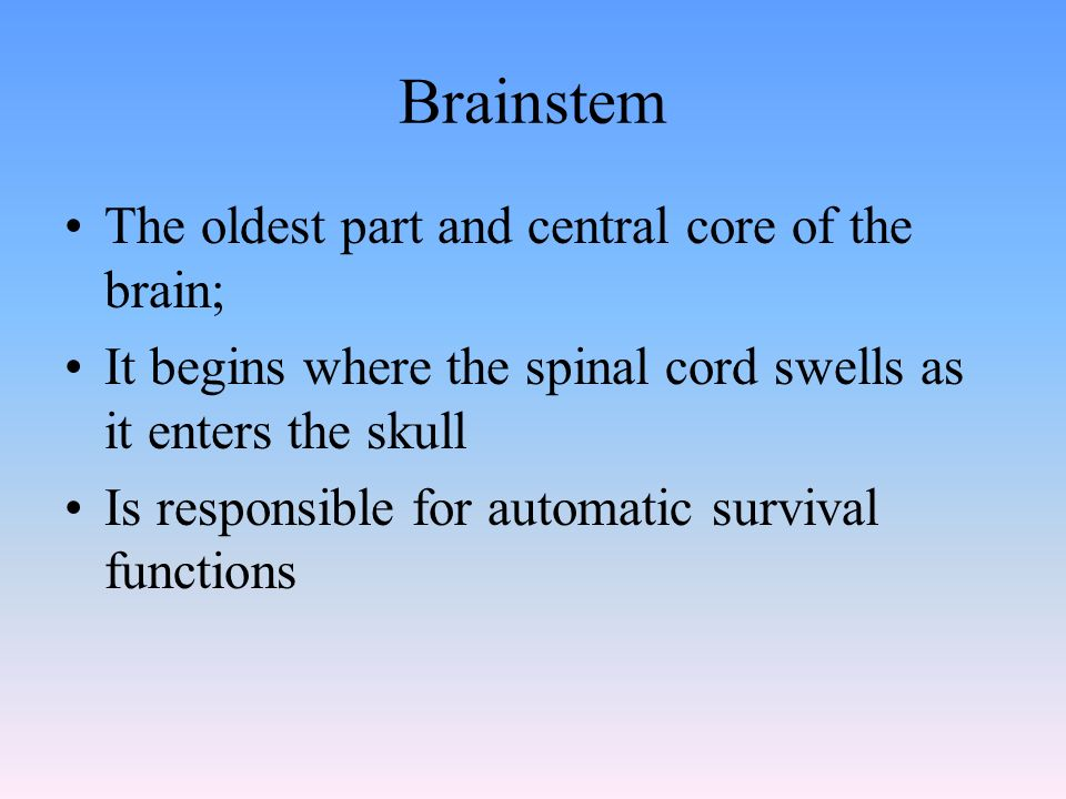 Brainstem The oldest part and central core of the brain; It begins where the spinal cord swells as it enters the skull Is responsible for automatic survival functions
