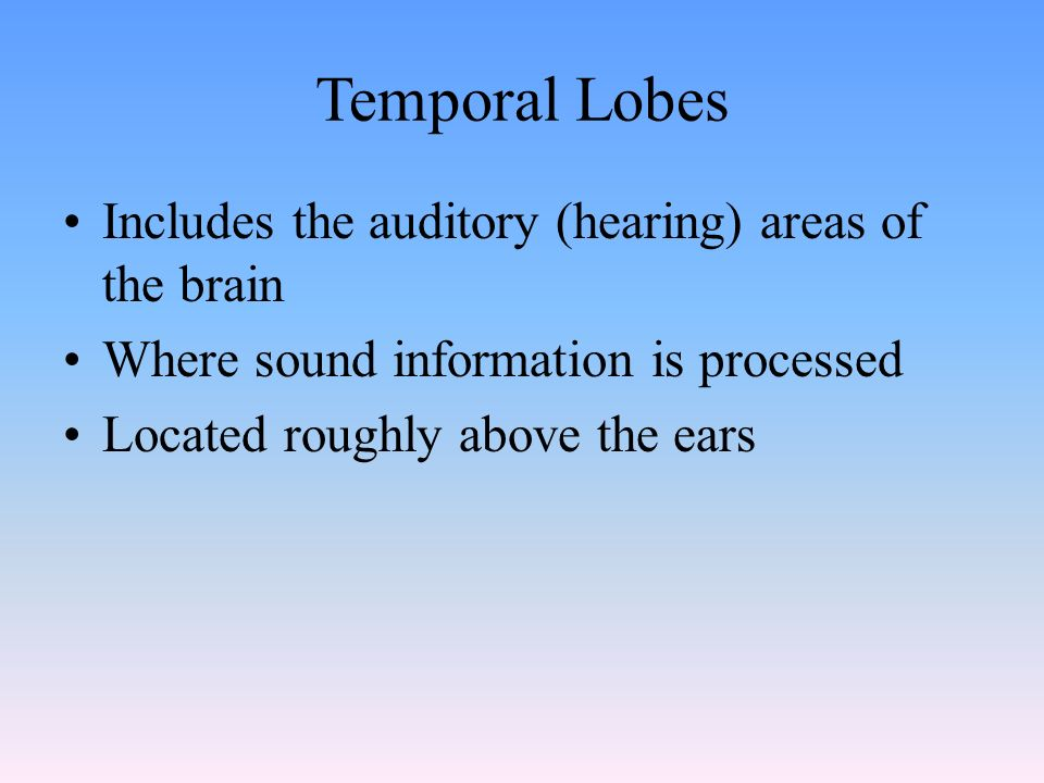 Temporal Lobes Includes the auditory (hearing) areas of the brain Where sound information is processed Located roughly above the ears