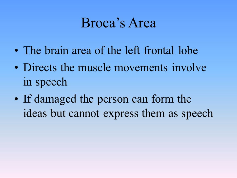 Broca's Area The brain area of the left frontal lobe Directs the muscle movements involve in speech If damaged the person can form the ideas but cannot express them as speech