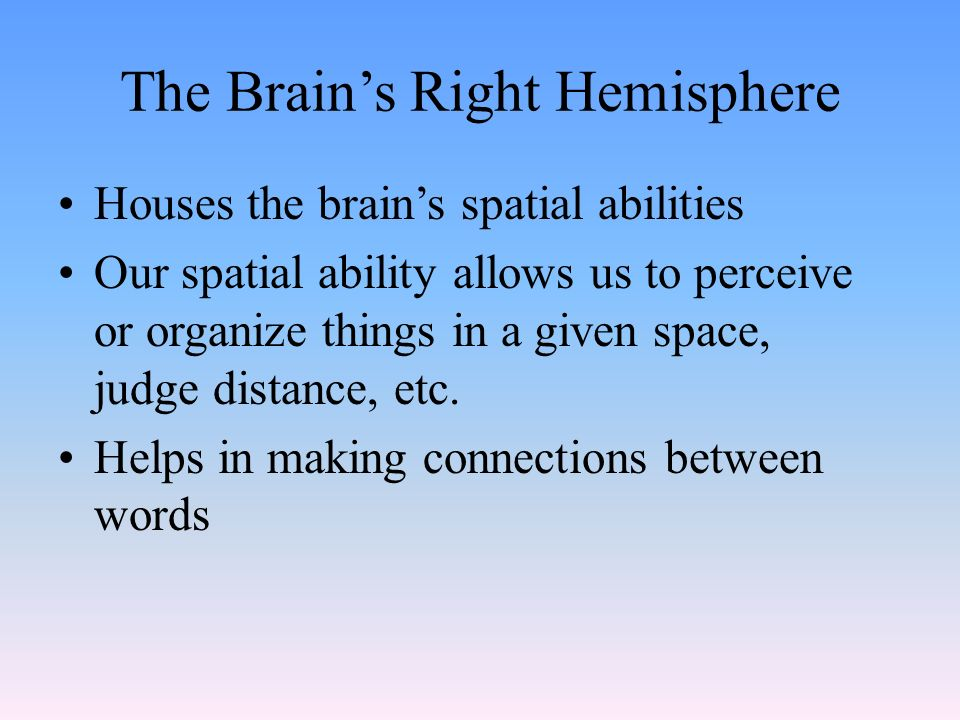 The Brain's Right Hemisphere Houses the brain's spatial abilities Our spatial ability allows us to perceive or organize things in a given space, judge distance, etc.