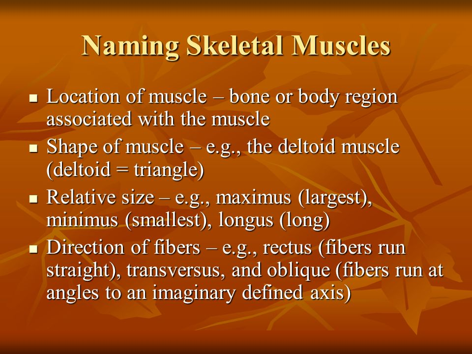Interactions of Skeletal Muscles Skeletal muscles work together or ...