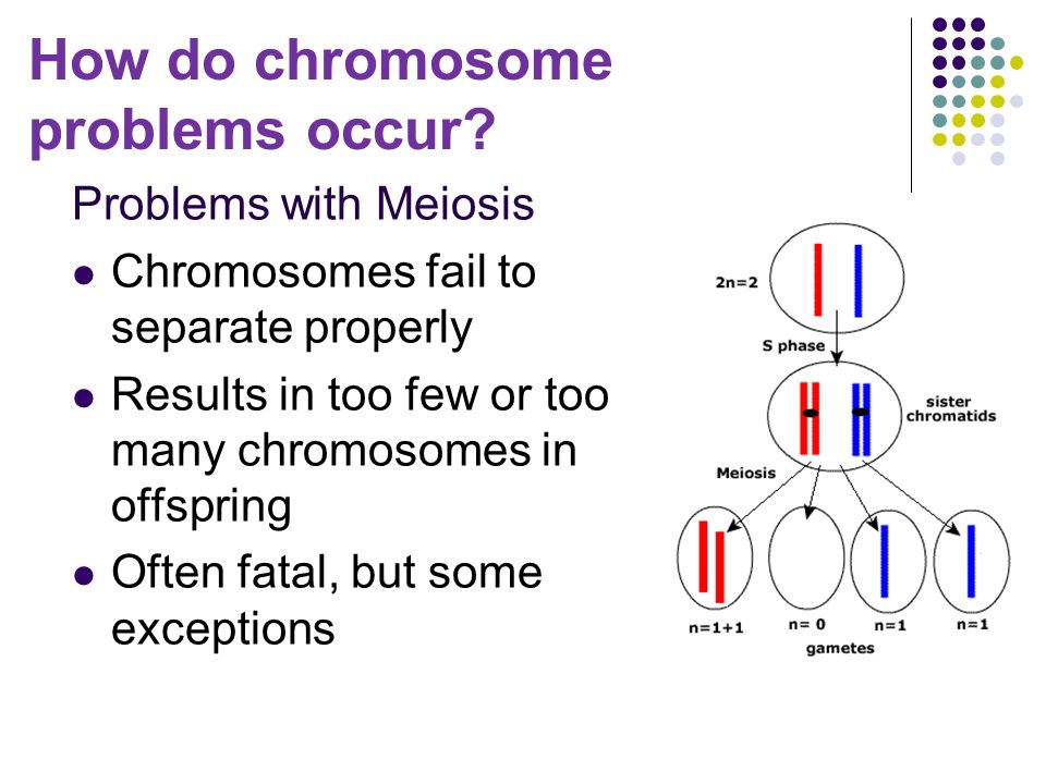 Problems with Meiosis Chromosomes fail to separate properly Results in too few or too many chromosomes in offspring Often fatal, but some exceptions How do chromosome problems occur