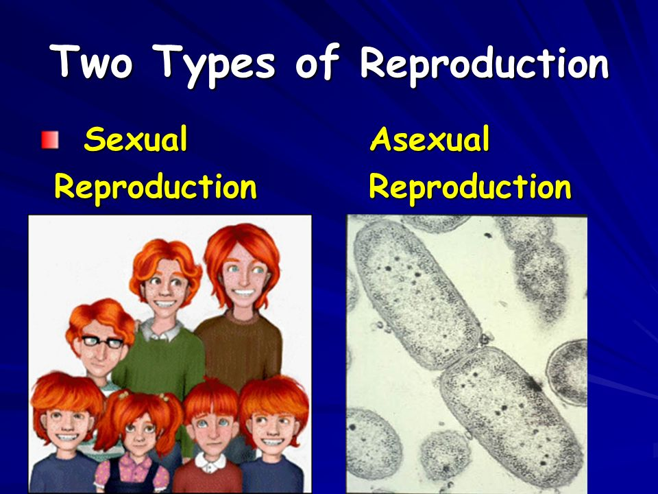 Two Types of Reproduction SexualAsexual ReproductionReproduction ReproductionReproduction