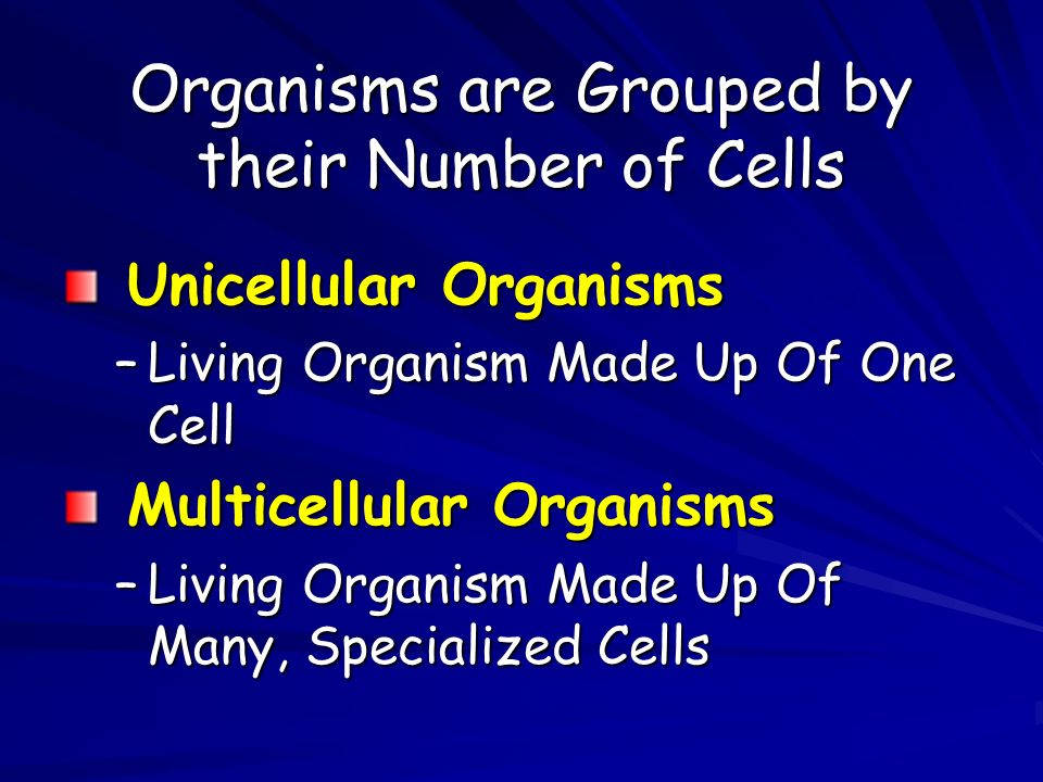 Organisms are Grouped by their Number of Cells Unicellular Organisms Unicellular Organisms –Living Organism Made Up Of One Cell Multicellular Organisms Multicellular Organisms –Living Organism Made Up Of Many, Specialized Cells